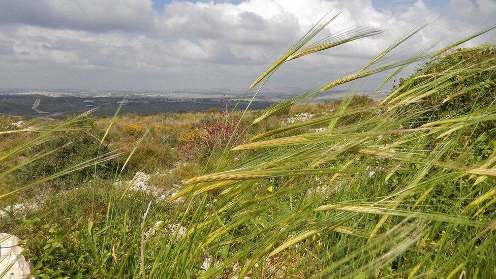 Paisaje en Israel