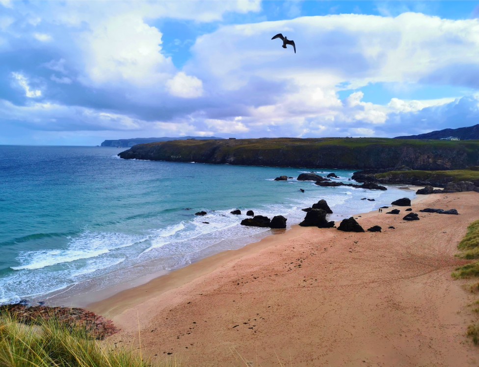 A gull in flight over Sango Sands Oasis beach in Durness, as captured by Jennifer Bonner from London.