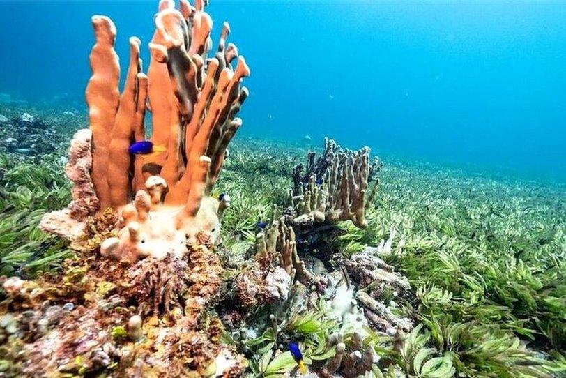 Saya de Malha deniz çayırları