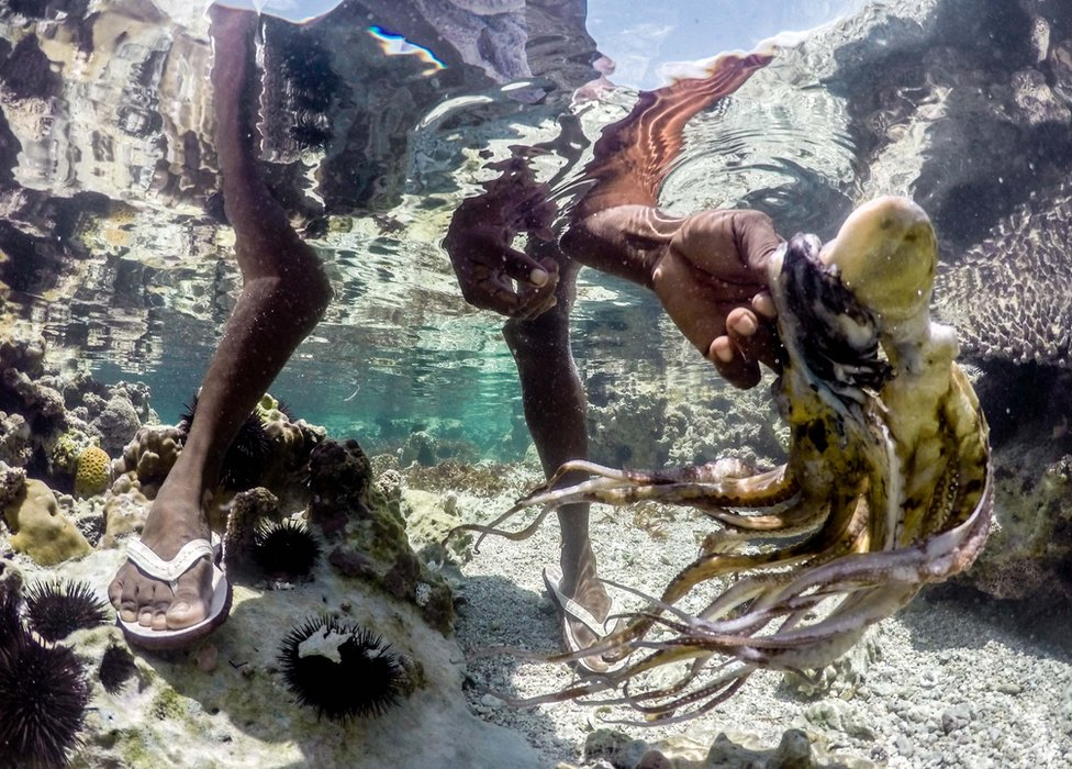 An octopus hunter rinses her catch in the waters off Bwejuu beach