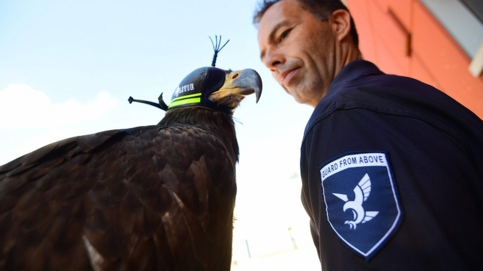 Eagle and officer