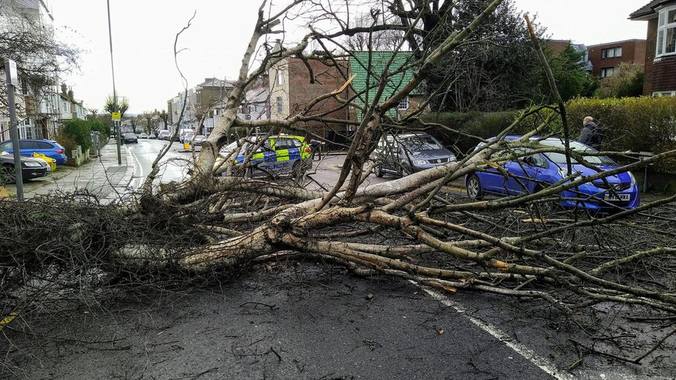 Across southern England, trees - like this one in Golders Green, London - were brought down by the storm