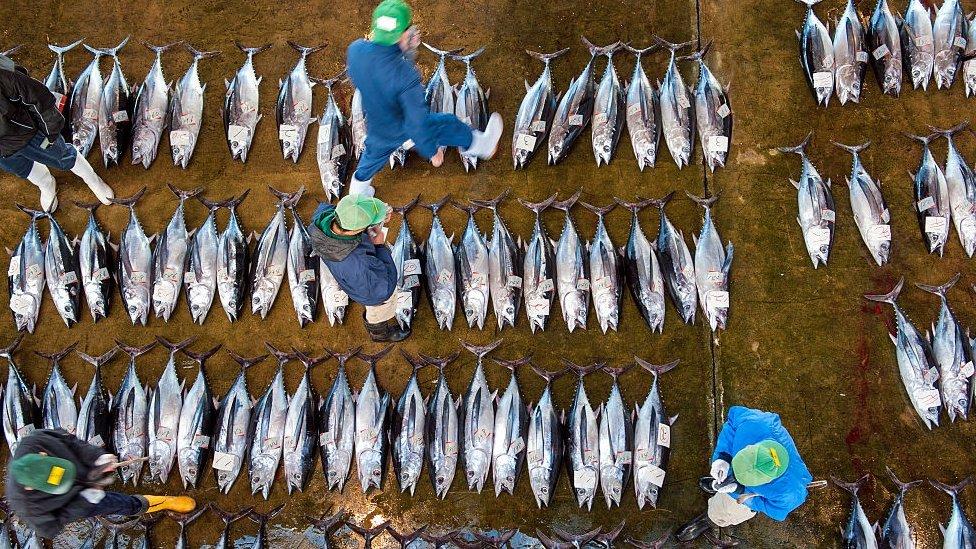 Una venta de atún en Japón