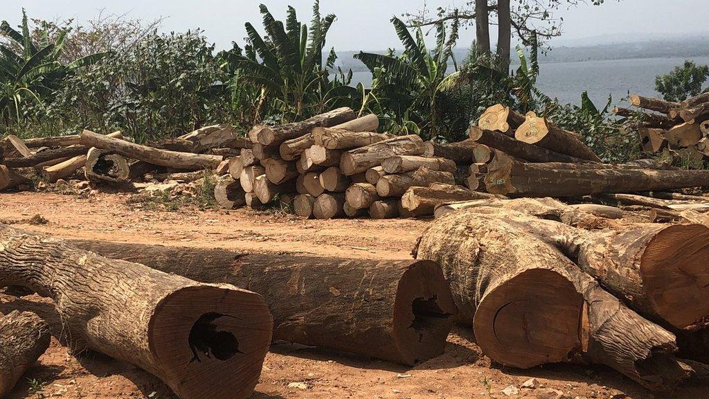 La madera del lago Volta podría impulsar la industria maderera de Ghana