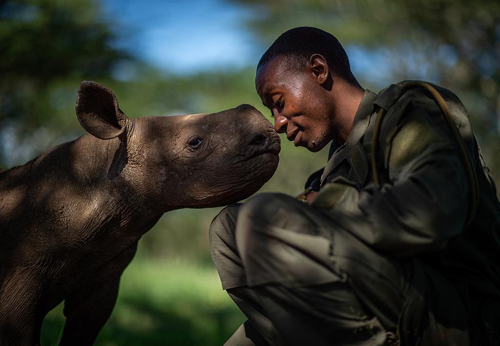 Guarda forestal con un rinoceronte negro bebé