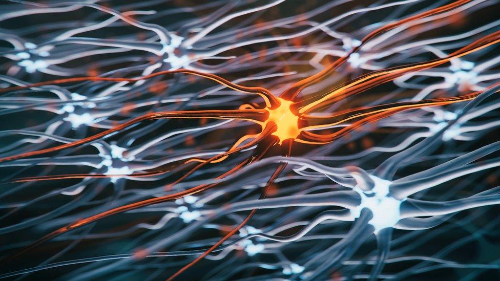 Dibujo de una motoneurona