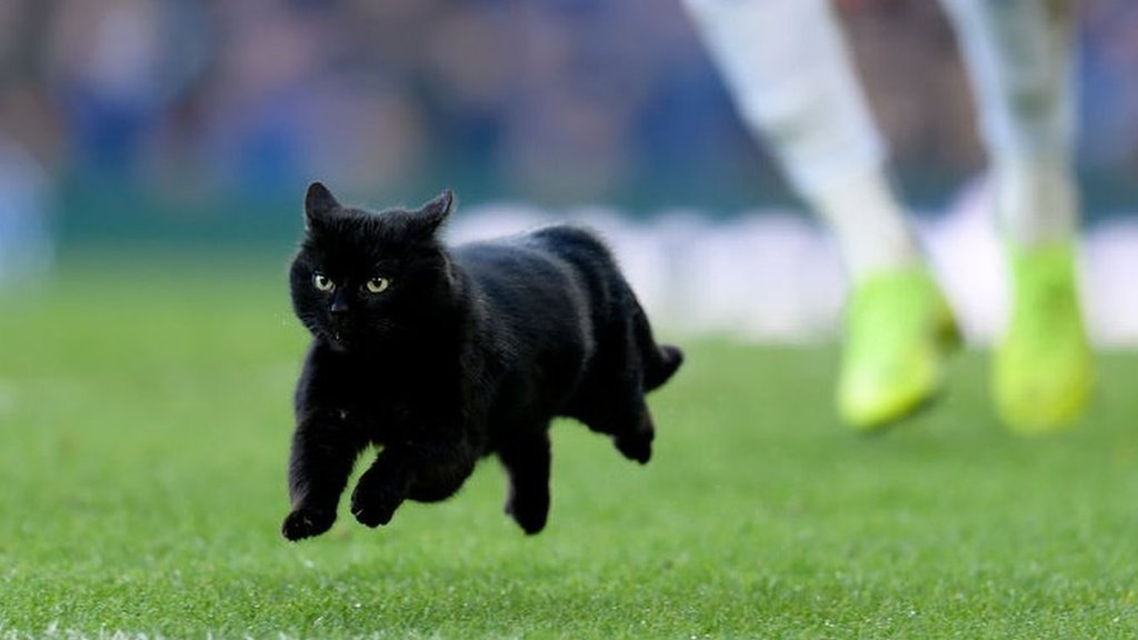 Cat's pitch invasion gets purrfect commentary