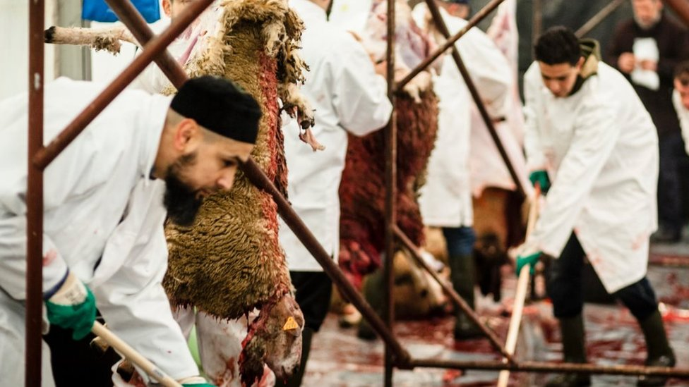 File pic of halal slaughter of sheep in Belgium