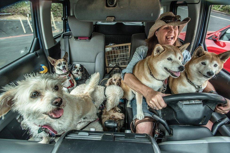 Leslie, professional dog walker