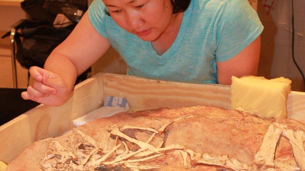 Bolortsetseg Minjin looking at dinosaur fossils