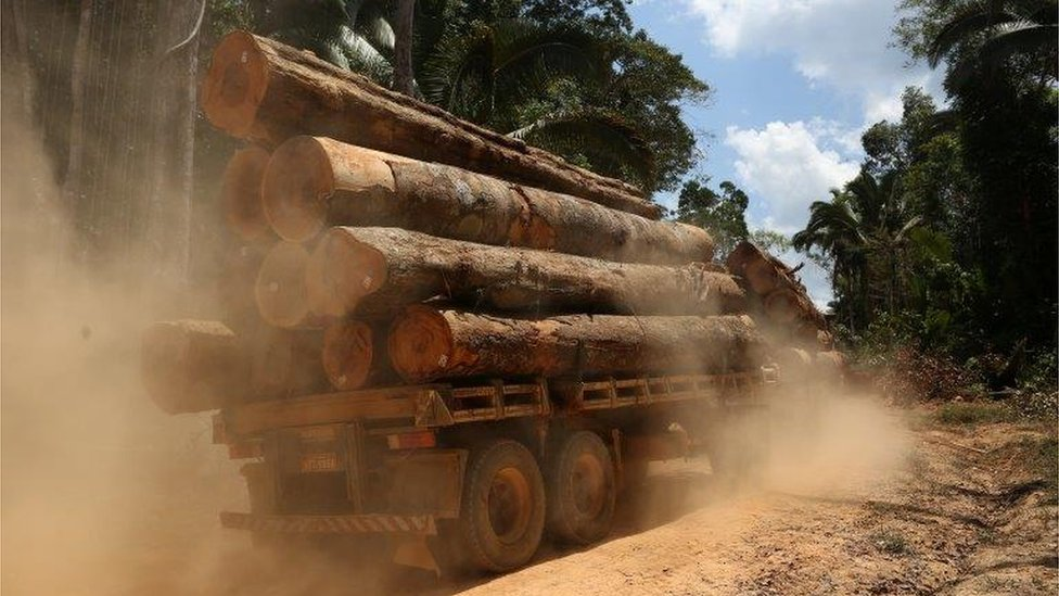 Timber trunk in the Amazon (Image: Reuters)
