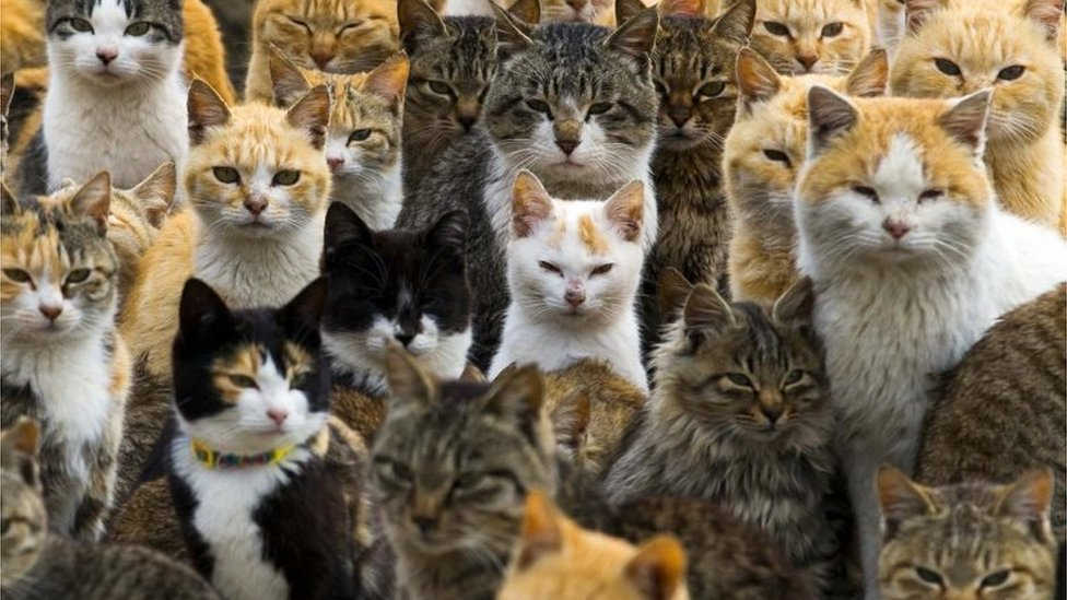 These Are The Amazing Things You Can Do In Japan On Cat Day Bbc News