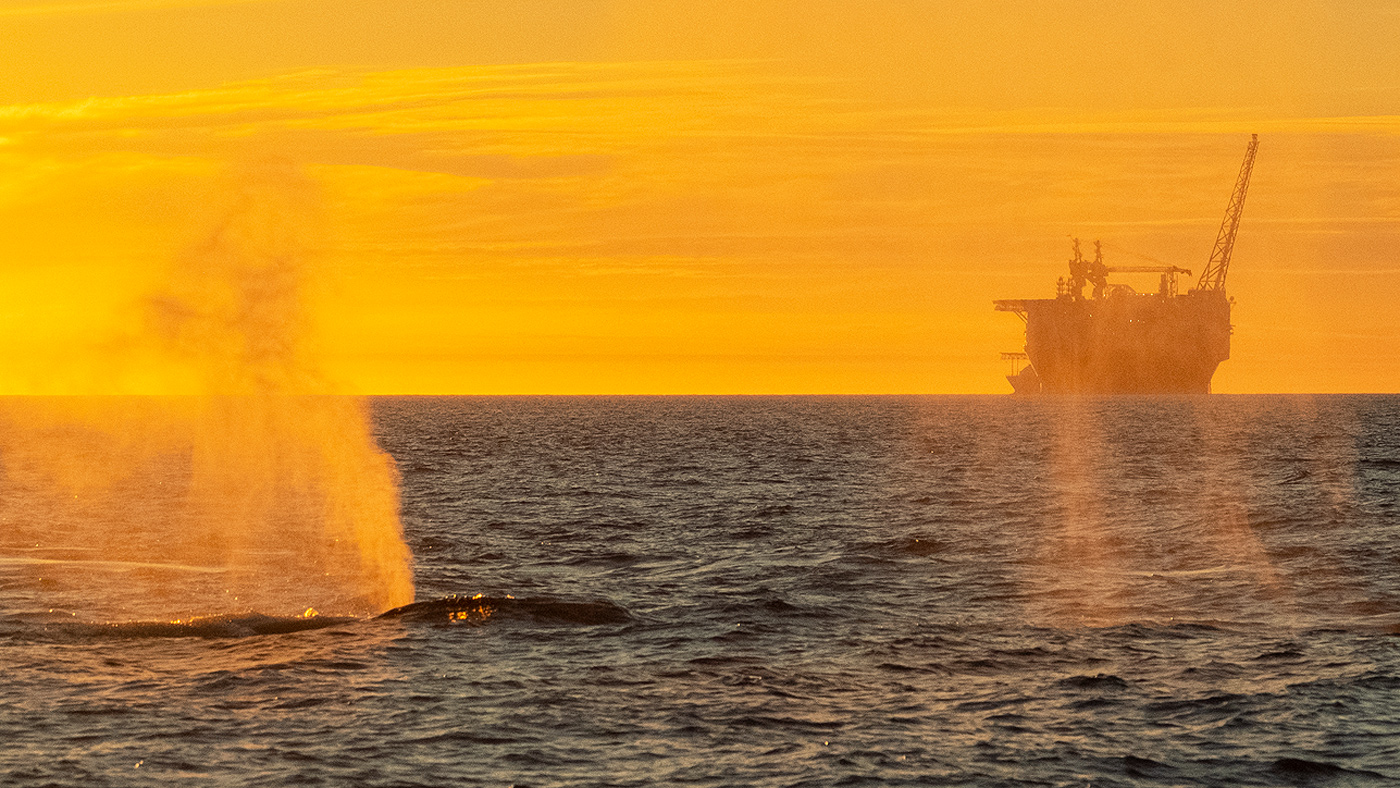 Whales and the Goliat oil rig, 2018