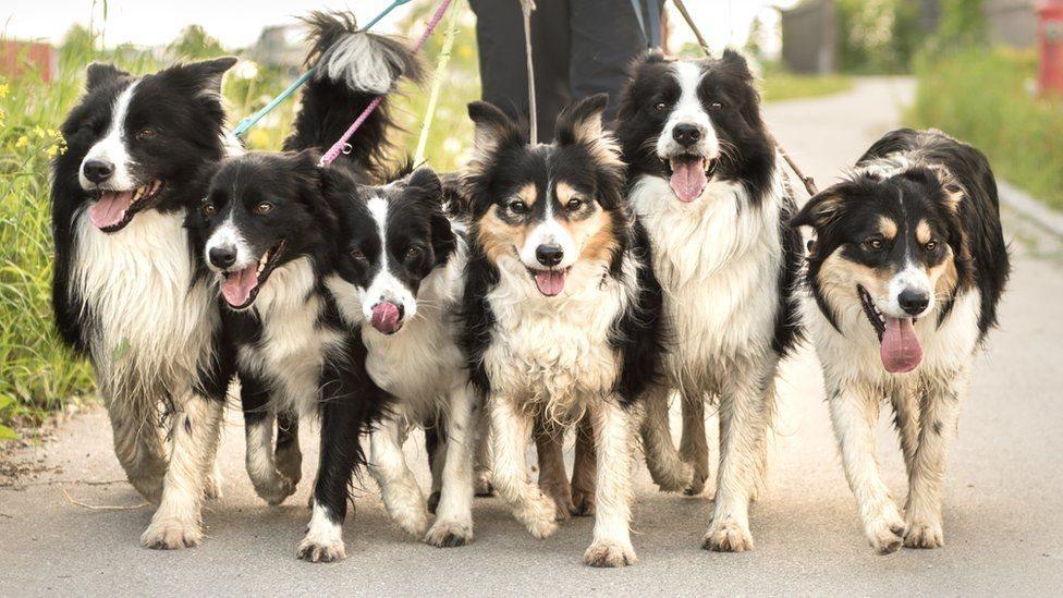 Довга прогулянка: нові подробиці історії собак та людей