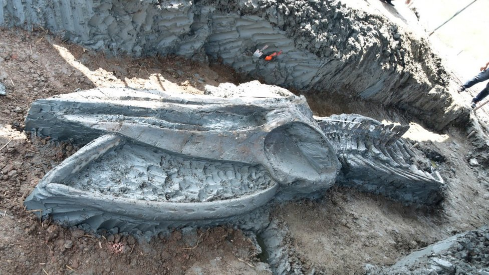 Thailand: Rare whale skeleton discovered thumbnail