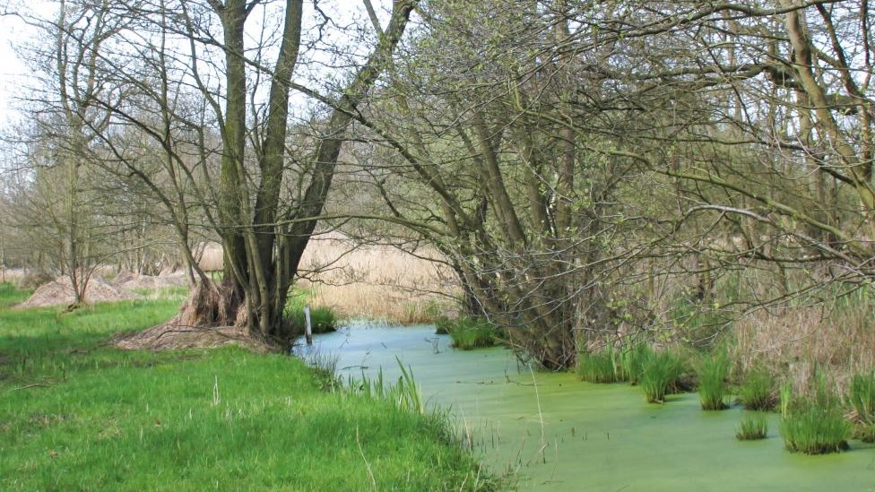 Yorkshire Wildlife Trust fears 500 homes plan 'will end' ancient Askham Bog