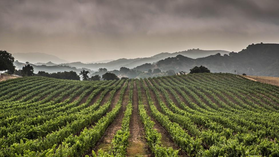 Cultivos en California