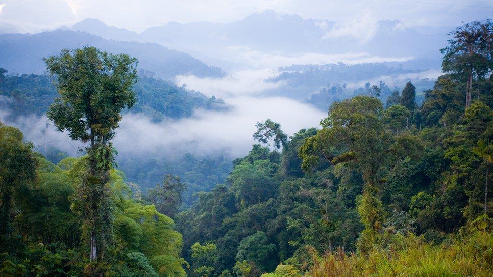 غابات الأمازون المطيرة