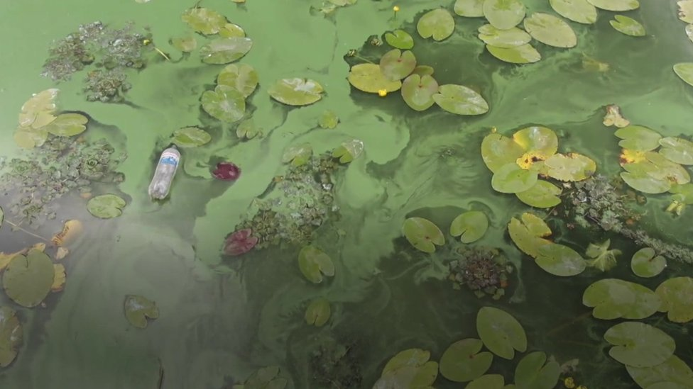 Algas verdes en el Dniéper