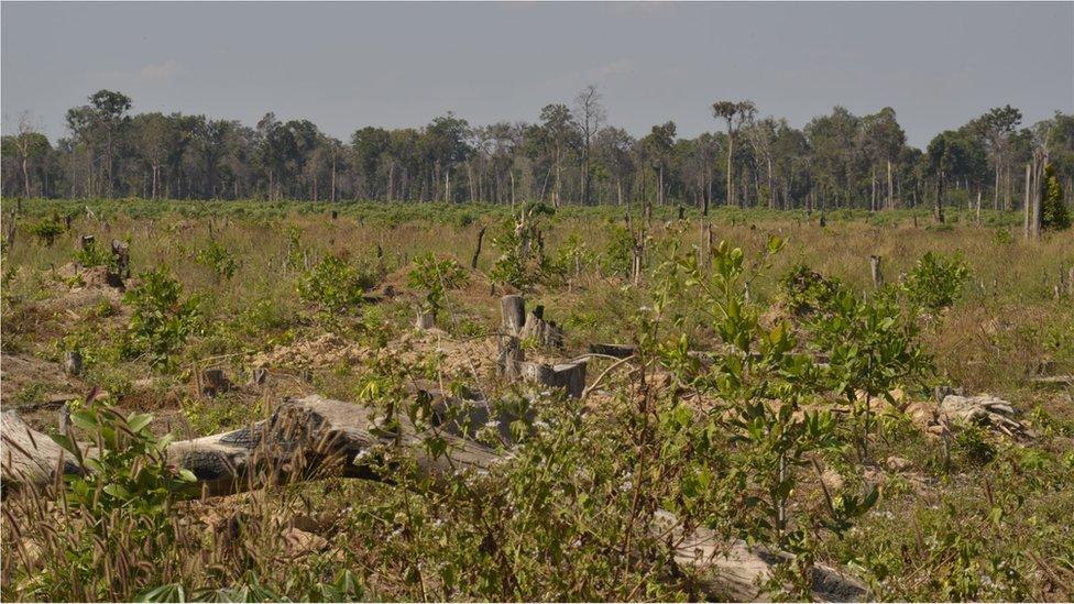 Deforested land (Image: Goldman Environmental Prize)