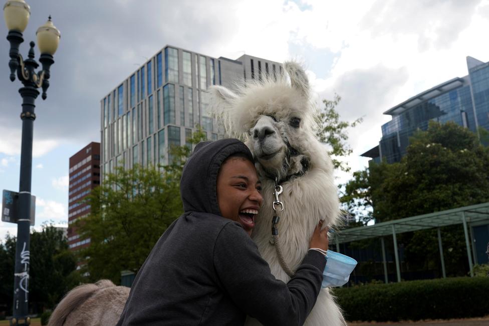 A person hugs a llama