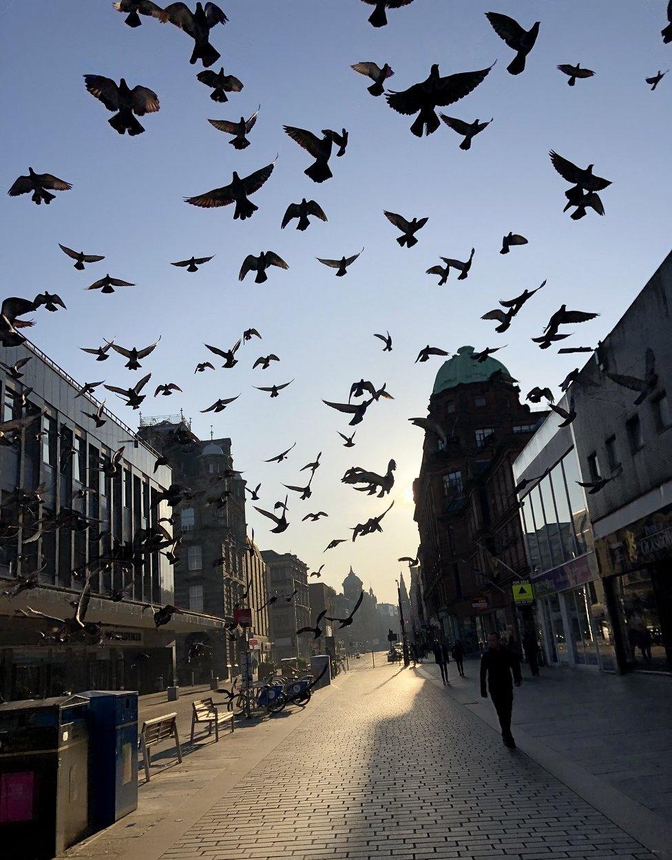Birds in Argyle Street, Glasgow