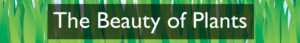 Section heading: The Beauty of Plants