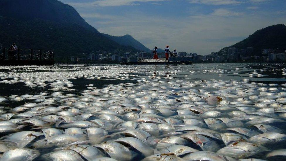 Dead fish, Brazil