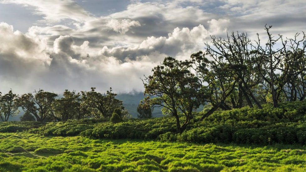 Panoramic view of Mount Kenya national park in the highlands of central Kenya.