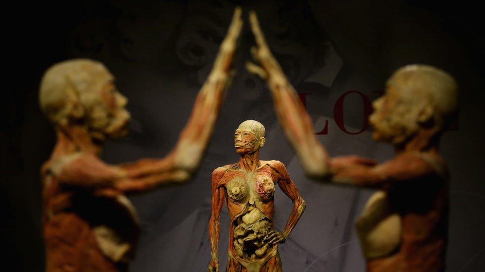 Los cuerpos son sometidos a un proceso en el que se extraen los líquidos y las grasas y se rellenan con materiales elásticos.
