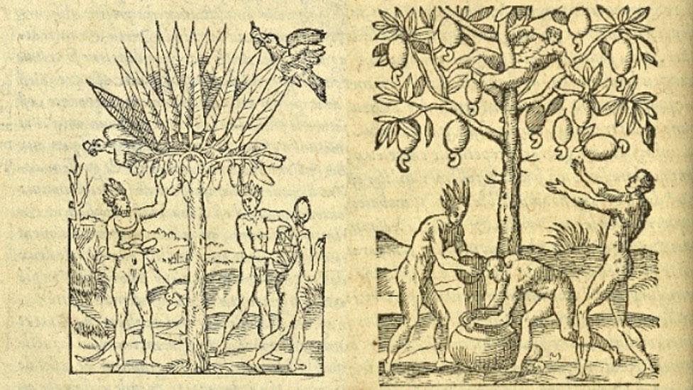 Dos ilustraciones de plantas. - New York Public Library