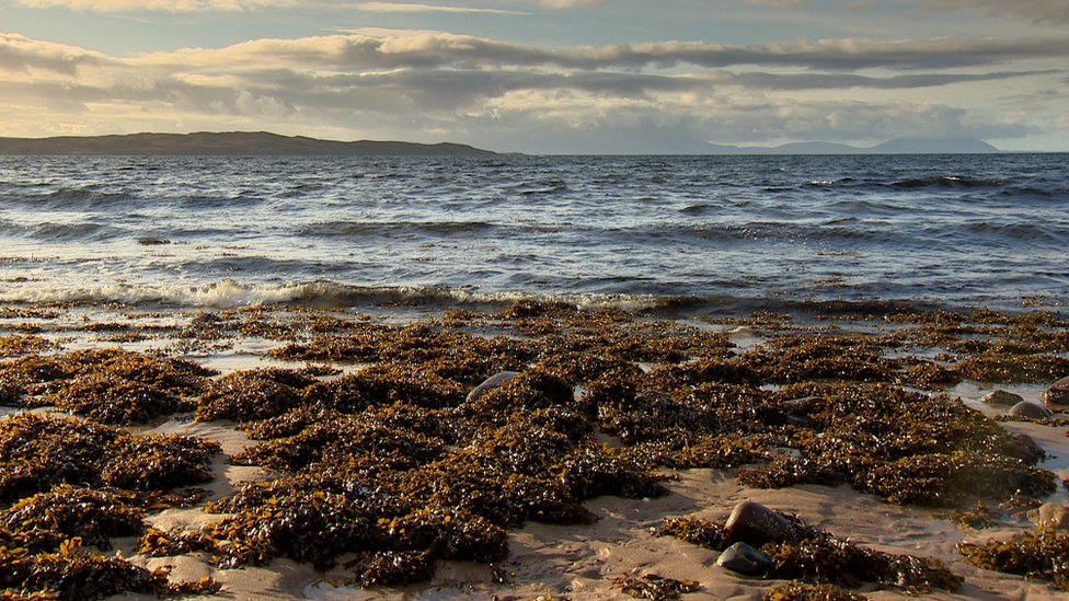 Probe into alleged scallop dredging in protected area