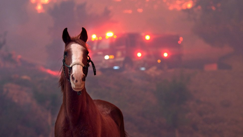 In pictures: The animals caught in California's wildfires
