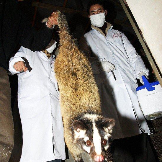 El dueño de un restaurante entrega a inspectores de salud na civeta que sujeta de la cola del mamífero