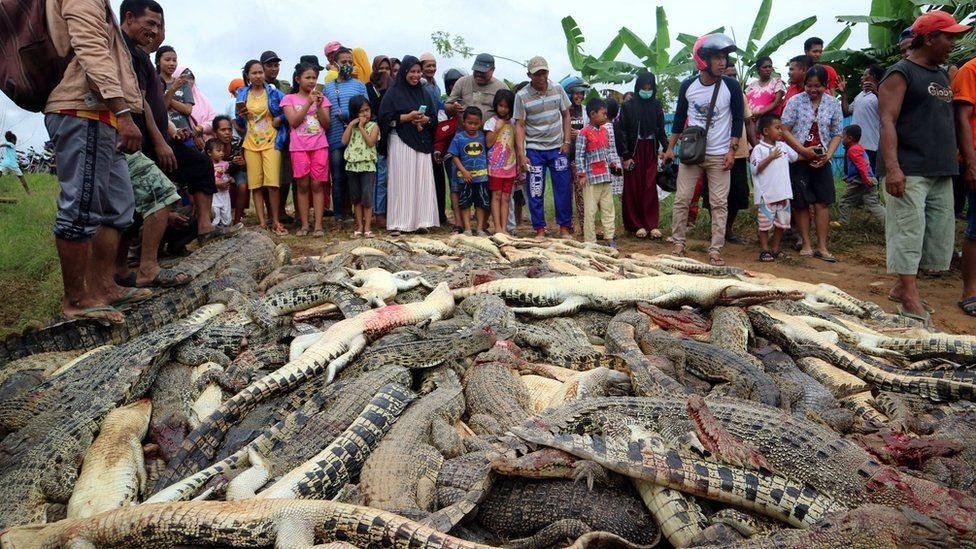 قتل الحيوانات المحمية يعد جريمة يُعاقب عليها بالغرامة أو الحبس في إندونيسيا