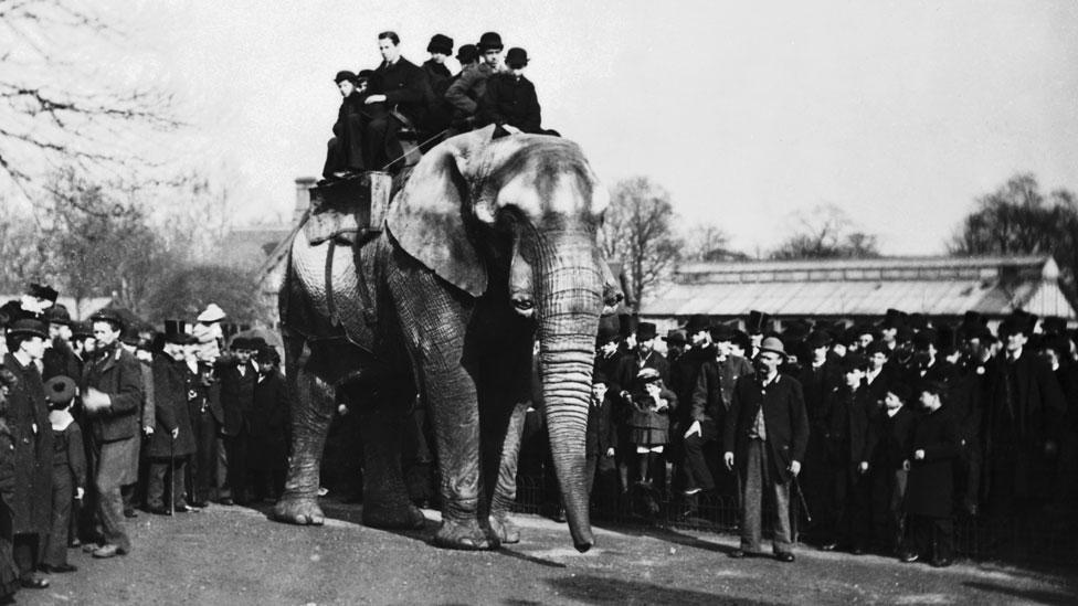 Jumbo con circa otto visitatori alle spalle allo Zoo di Londra Foto: Wiki Commons