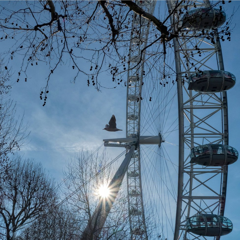 A seagull flying past the London Eye
