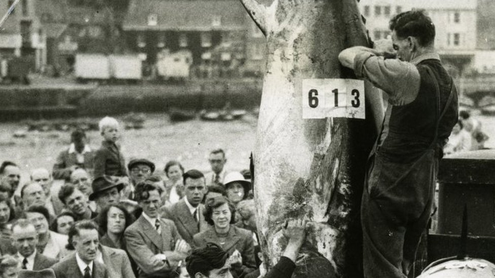 Could big-game fishing return to the UK?