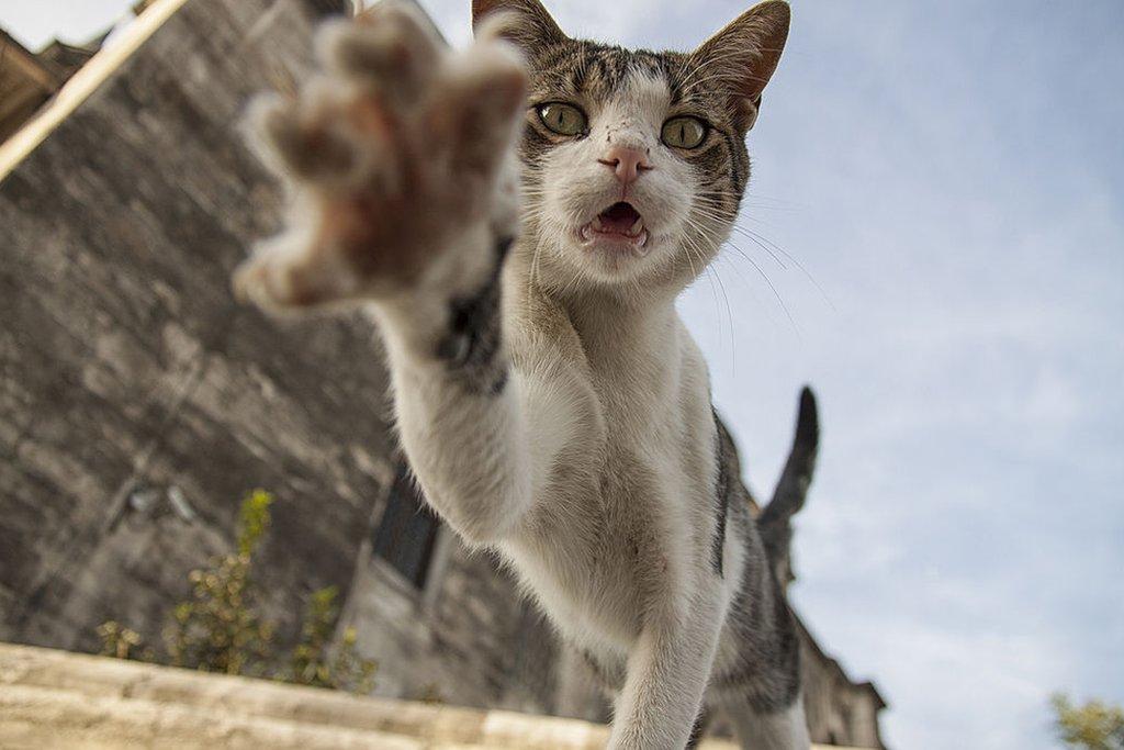 Gato quiere tomar la cámara.
