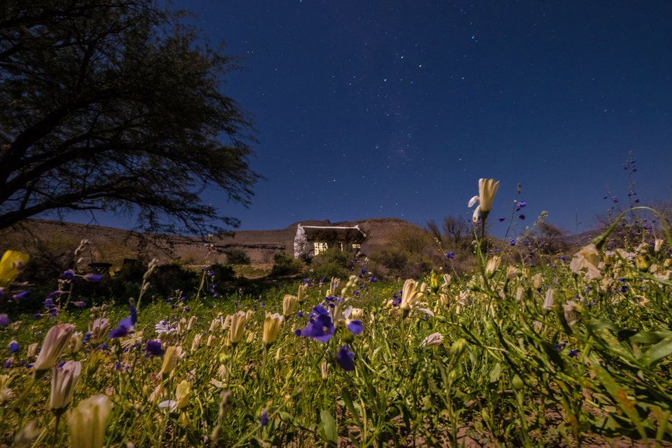 Flowers in the desert at night with a house in the background