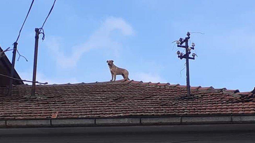 Pas u Rtogini
