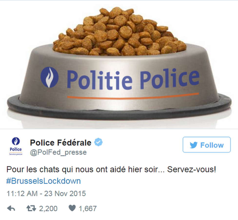 """Belgium Federal Police tweets: """"To all the cats who helped us last night: help yourselves!"""""""