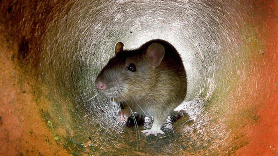 Pacov u tunelu