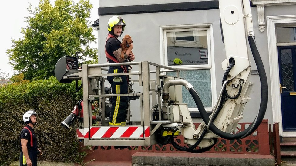 Puppy in the arms of fireman as it is rescued