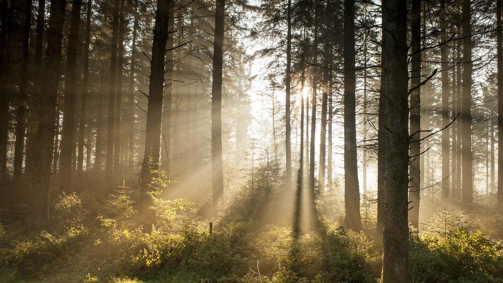 Bellever Woods, Devon