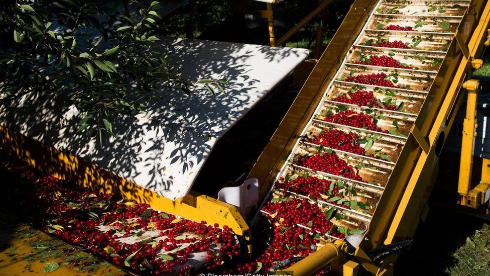 máquina que transporta cerezas