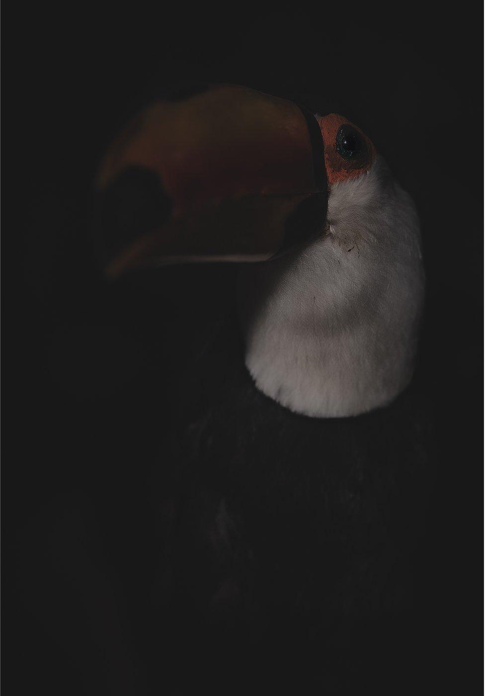 A stuffed dead toucan bird