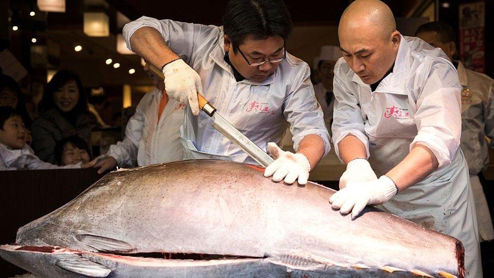 Two men cut into a massive tuna
