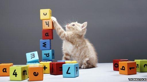 kitten and alphabet blocks