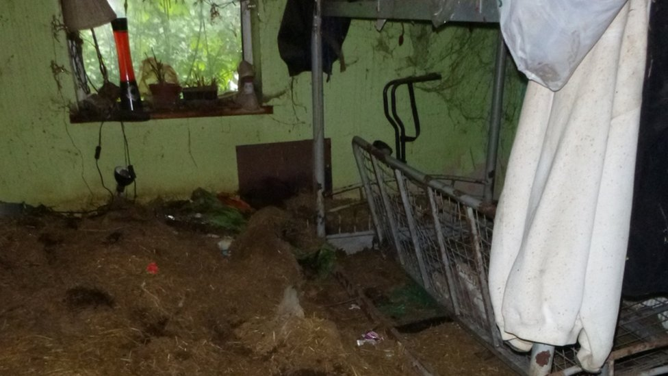 The squalid bedroom where Barbara Herbert kept her Guinea pigs